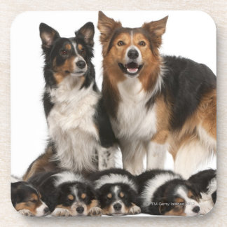 Border collie family coaster
