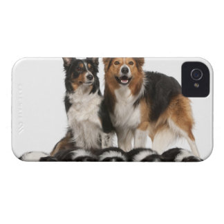 Border collie family iPhone 4 cover