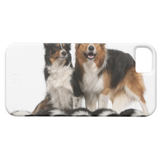 Border collie family iPhone 5 case