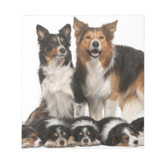 Border collie family notepad