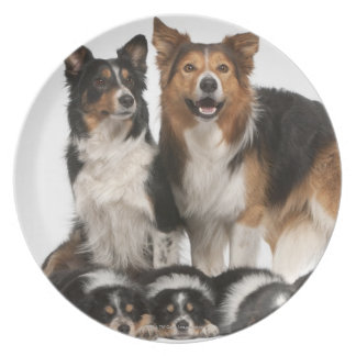 Border collie family plate