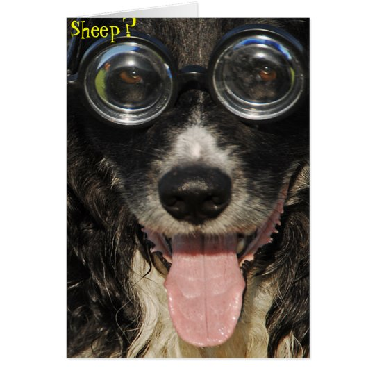 Border Collie Funny Card