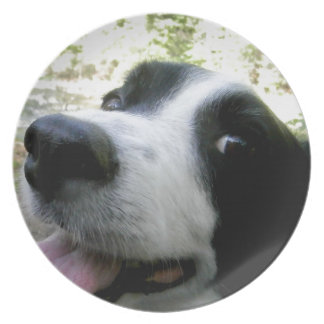 Border Collie Gifts Plate