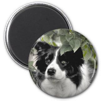 Border Collie girl 6 Cm Round Magnet