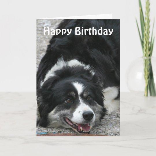 border collie  happy birthday card  zazzlecouk
