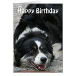 Border Collie - Happy Birthday Greeting Cards