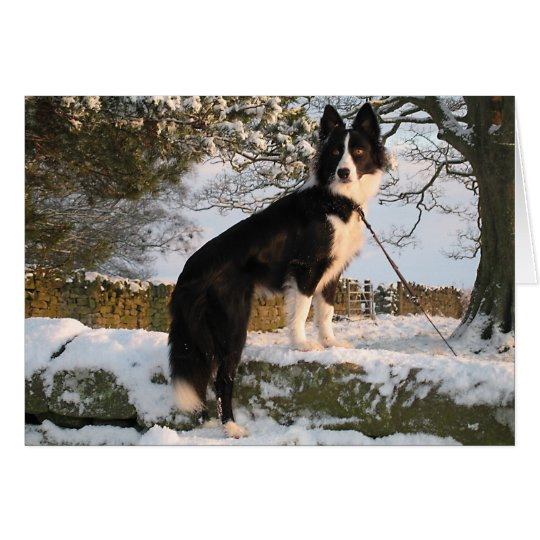 Border Collie in Snow Card