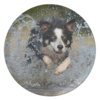Border Collie jumping in water Plates