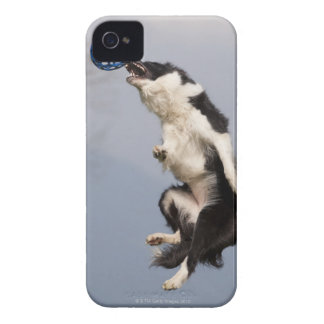 Border Collie just before catching the ball high iPhone 4 Cases