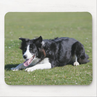 Border Collie Laying Down Mouse Pad