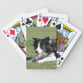 Border Collie Laying Down Poker Deck