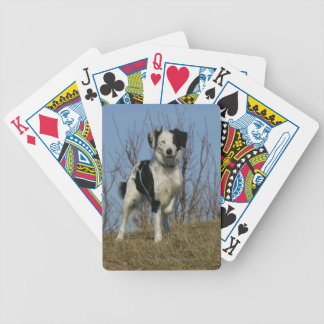 Border Collie Leg Raised Bicycle Playing Cards