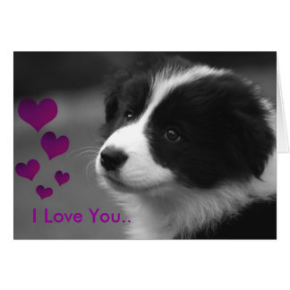 Border Collie Love Greeting Card