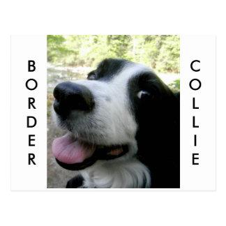 Border Collie Love Postcard