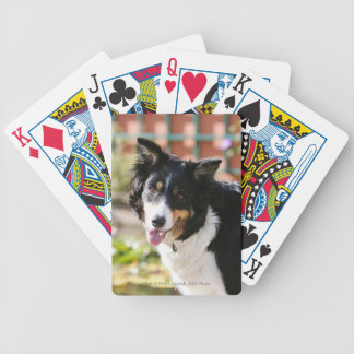 Border Collie Panting 1 Bicycle Playing Cards