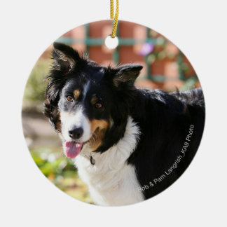 Border Collie Panting 1 Christmas Ornament