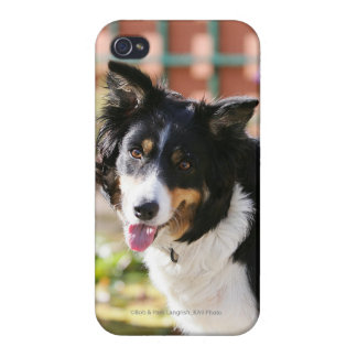 Border Collie Panting 1 iPhone 4 Cases