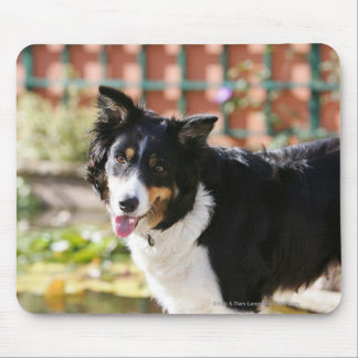 Border Collie Panting 1 Mouse Mat