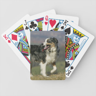Border Collie Panting 2 Bicycle Playing Cards