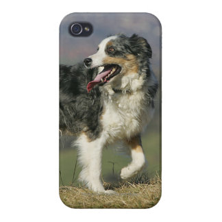 Border Collie Panting 2 iPhone 4/4S Covers