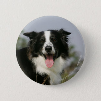 Border Collie Panting Headshot 1 6 Cm Round Badge