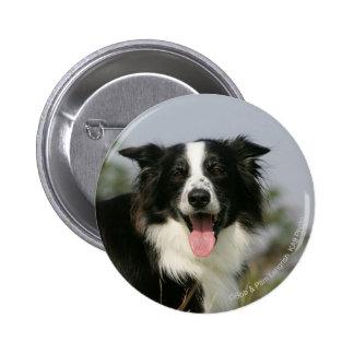 Border Collie Panting Headshot 1 6 Cm Round Badge