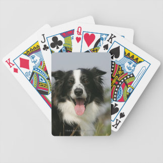 Border Collie Panting Headshot 1 Bicycle Playing Cards