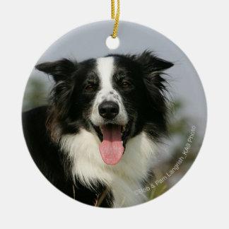 Border Collie Panting Headshot 1 Christmas Ornament