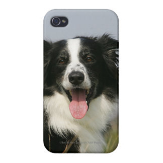 Border Collie Panting Headshot 1 iPhone 4/4S Case