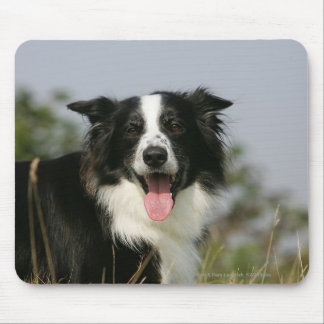 Border Collie Panting Headshot 1 Mouse Pad