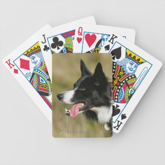 Border Collie Panting Headshot 2 Bicycle Playing Cards
