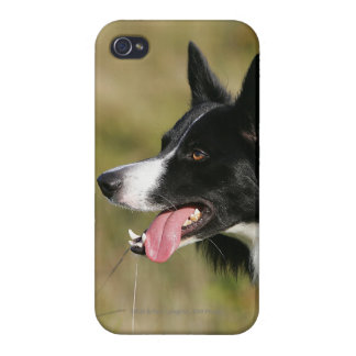 Border Collie Panting Headshot 2 Cases For iPhone 4