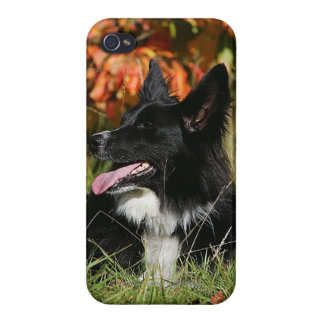 Border Collie Panting Laying Down Covers For iPhone 4
