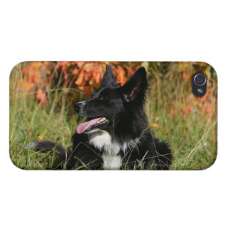 Border Collie Panting Laying Down iPhone 4/4S Cover