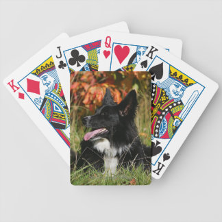 Border Collie Panting Laying Down Poker Deck