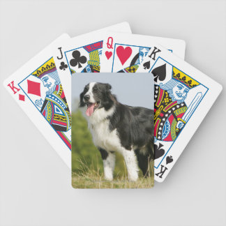 Border Collie Panting Standing Bicycle Playing Cards