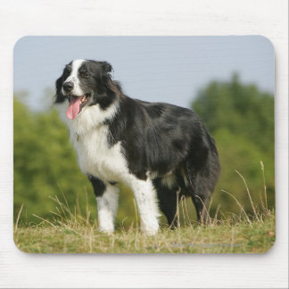 Border Collie Panting Standing Mouse Pad