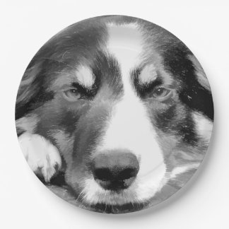 BORDER COLLIE PAPER PLATE