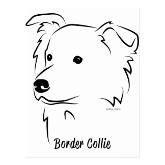 Border Collie Postcard