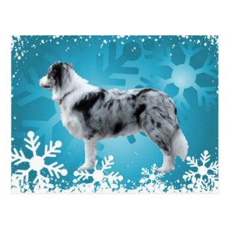 Border Collie Postcard~Christmas Postcard