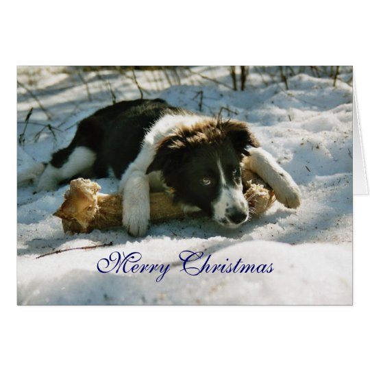 Border Collie pup dog snow custom Christmas Card