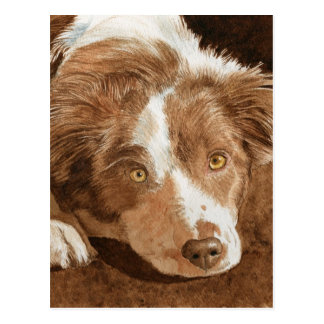 Border Collie Pup Postcard