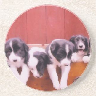 Border Collie Puppies Dog Animal Coaster