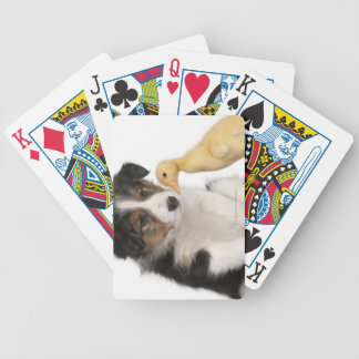 Border collie puppy (6 weeks old) with duckling bicycle playing cards