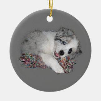 border collie puppy blue merle christmas ornament