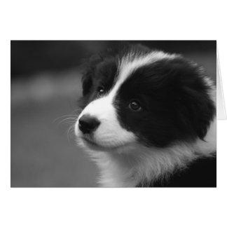 Border Collie Puppy Card