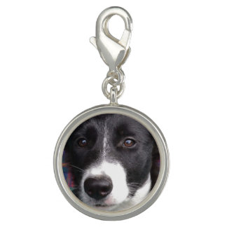 Border collie puppy charm