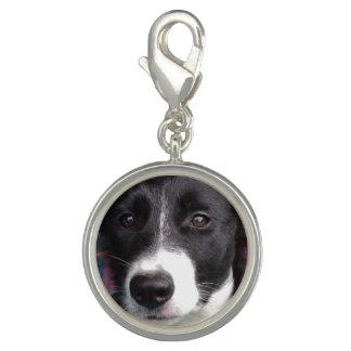 Border collie puppy charm