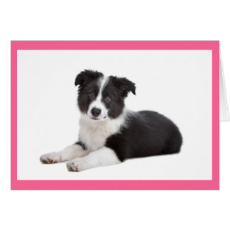 Border Collie Puppy Dog Blank Note Card