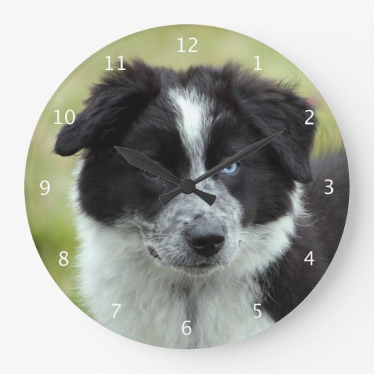 Border collie puppy dog cute beautiful photo large